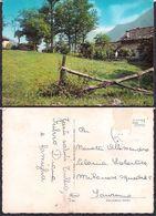 Italia - Cartolina Postale - Alberi - Circa 1970 - Circulee - Cygnus - Árboles