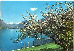 Albero Fiorito Sul Lago - Other