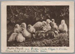 Glückwunschkarte - S/w Herzliche Ostergrüße     Mit Küken - Ostern