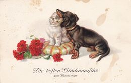 Dackel Teckel Dachshund  Cat  Chien  Old Dog Cpa. 1935 - Hunde