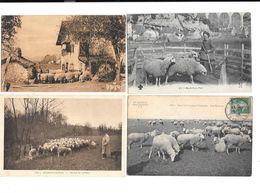 11697 - Lot De 4 CPA  MOUTONS - Tierwelt & Fauna