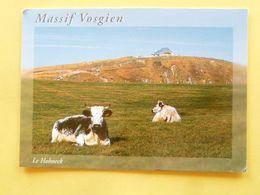 V10-88-vosges--le Hohneck-haute Vosges-vaches- Beau Timbre- - France