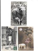 11701 - Lot De 3 CPA  ELEPHANTS - Elefantes