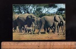 Animaux Faune Africaine : Troupeau D' Elephants D'Afrique  éléphant Elefant Elefants Africa African - Elefantes