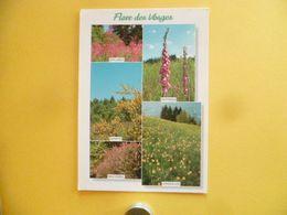 V10-88--vosges- Flore Des Vosges -epilobes-genets- Bruyeres-digitales- Jonquilles-- - France