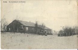 Heide  De Cambuis In De Duinen - Kalmthout