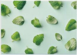 DUFTKARTE Mit Zitronenmelisse- Mit Webstamp - Ungelaufen/unbeschrieben - Flores, Plantas & Arboles