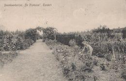 Oude Postkaart Vorsselmans Zundert Boomkwekerij De Pijnboom - Sonstige