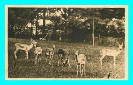 A850 / 111 76 - CLERES Parc Zoologique Antilopes Cervicapre ( Zoo ) - Clères