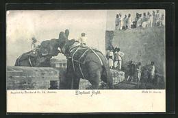 AK Kampf Zweier Elefanten In Indien - Elefantes