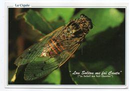 Insectes ---1996-- La Cigale De Provence.....timbre....cachet RUOMS - 07......à Saisir - Insectos