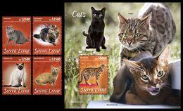 SIERRA LEONE 2020 - Cats, 4v + S/S Official Issue [SRL200213] - Sierra Leone (1961-...)