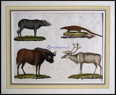 4 Verschiedene Säugetiere (Phatagin, Saiga-Antilope, Renntier U. Hirscheber) Auf Einem Blatt, Altkolorierter Kupferstich - Lithographies