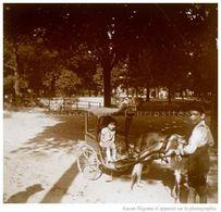 Photo Ancienne Originale Stéréoscopique -  Jardin - ATTELAGE De CHÈVRE - Carriole Avec Enfant - 3D - Relief - STEREO - Plaques De Verre