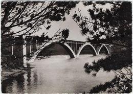 29 Environs De Brest  Pont De Plougastel-daoulas  A Travers Les Pins - Plougastel-Daoulas
