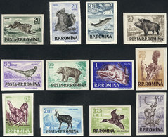 ROMANIA: Yvert 1488/99, 1956 Animals, Complete Set Of 12 Imperforate Values, VF Quality, Catalog Value Euros 80. - Rotary, Lions Club