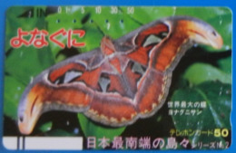 Japan Japon Butterfly Papillon Mariposa Schmetterling Farfalla Insect Butterflies Moth Attacus Atlas - Butterflies