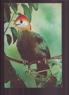 TOURACO A JOUES BLANCHES - Oiseaux