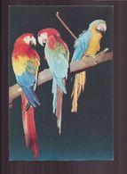 ARA - Oiseaux