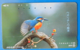 Japan Japon Martin Fisher Kingfisher Bird Uccello Aves Pajaro - Birds