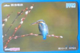 Japan Japon Martin Fisher Kingfisher Bird Uccello Aves Pajaro Lagare Kansai - Birds