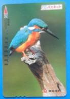Japan Japon Martin Fisher Kingfisher Bird Uccello Aves Pajaro Kansai - Birds