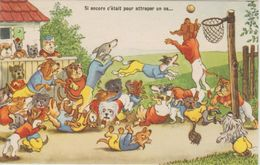CPSM 50-60              CHATS CHIENS  . HUMANISES   SPORT BASKET - Chats