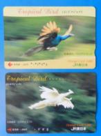 Japan Japon X2 Peacock Peafowl Pavone Pavo Uccello Aves Pajaro Tropical Bird Orange Card - Gallinaceans & Pheasants