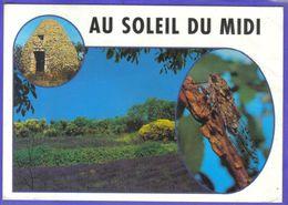 Carte Postale  Cigale Dans Le Midi  Lavande Et Borie  Très Beau Plan - Animaux & Faune