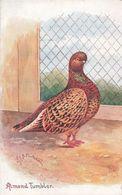Oiseaux Pigeon Almund Tumbler Illustrateur Chatterton Carte Oilette Raphael Tuck Série Prize Pigeons Bird Birds Oiseau - Oiseaux