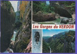 Carte Postale  Cigale Dans Les Gorges Du Verdon  La Beaume Aux Pigeons  Très Beau Plan - Animaux & Faune
