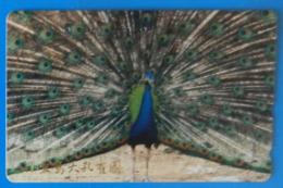 Japan Japon Peacock Peafowl Pavone Pavo Bird Uccello Aves Pajaro - Gallinaceans & Pheasants