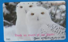 Japan Japon Snow Owl  Eule  Hibou Buho Bird Uccello Aves Pajaro Earth - Owls