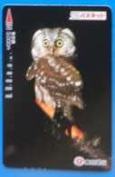 Japan Japon Owl Eule Hibou Buho Bird Uccello Aves Pajaro - Owls