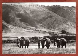 Afrikanische Steppenelefanten (95488) - Elefantes