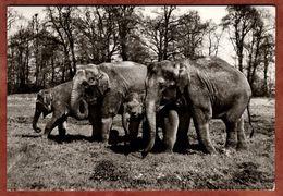 Indische Elefanten (95489) - Elefantes