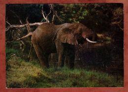 Afrikanischer Steppenelefant (95490) - Elefantes