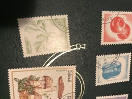 GUINEA I FIORI 1 VALORE - Africa (Other)