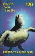 USA - Green Sea Turtle, NAT(North American Telephone) Prepaid Card $20, Tirage 2000, Used - Etats-Unis