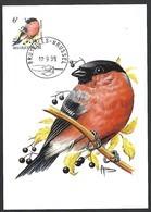 OCB Nr 2295 Fauna Buzin  Stempel   Bruxelles - Brussel - 1985-.. Oiseaux (Buzin)