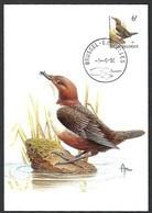 OCB Nr 2459 Fauna Buzin  Stempel   Brussel - Bruxelles - 1985-.. Oiseaux (Buzin)