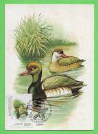 Portugal 1982  Mi.Nr. 1570 , Kolbenente (Netta Rufina Linn) - Maximum Card - CTT Philexfrance 11.Junho 1982 - Ducks