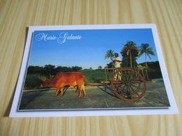 Marie-Galante (Guadeloupe).Char à Boeufs Pour Le Transport De La Canne. - Guadeloupe