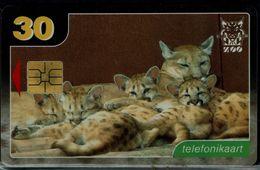 ESTONIA 2004 PHONECARDS CATS USED VF!! - Cats