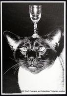 Portrait De Chat Avec Un Verre En équilibre Sur La Tête - Portrait Of Cat With A Glass Balancing On Its Head - Animales Vestidos