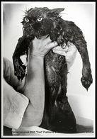 Portrait De Chat Mouillé Sortant D'un Bain - Portrait Of Wet Cat Coming Out Of A Bath - Animales Vestidos