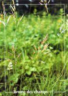 CPSM   Brome Des Champs  (1996-pierron) - Flores, Plantas & Arboles