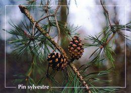 CPSM   Pin Sylvester  (1996-pierron) - Flores, Plantas & Arboles