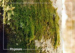 CPSM   Hypnum  (1996-pierron) - Flores, Plantas & Arboles