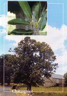 CPSM   Chataignier  (1996-pierron) - Flores, Plantas & Arboles
